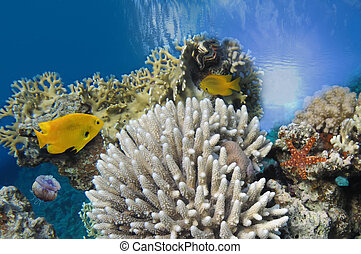 海洋, 水下, 背景, 圖像