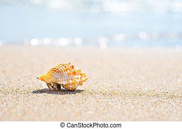 海滩, 宏, 沙子, 壳, 射击