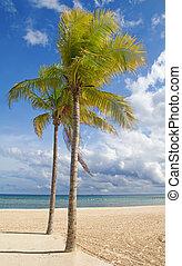 海滩, 沙