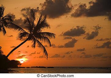 海灘, 夢想, 傍晚