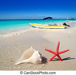 海灘, starfish, 以及, 海貝殼, 在懷特上, 沙子