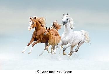 海灣, lusitano, 馬, 在, 冬天, 領域