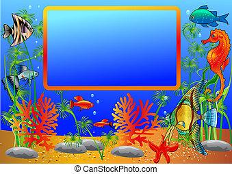 海藻, fish, 框架, 海面以下