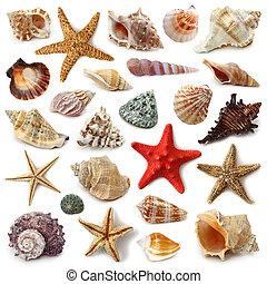 海貝殼, 彙整