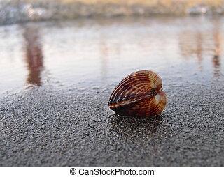 海貝殼, 海灘