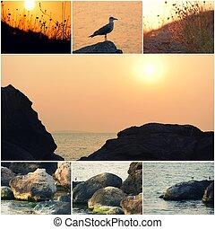 海鷗, 所作, the, 海, 海, 表面, 在, 傍晚, 石頭, 上, the, 海岸, 拼貼藝術, ......的, 相片, copyspace, 上, 傍晚天空, 在, 中心, 明信片, 樣板