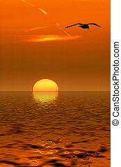 海鸥, 同时,, 日落