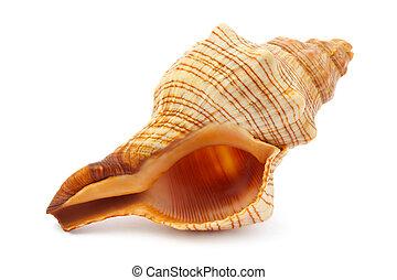 海, らせん状に動きなさい, 殻