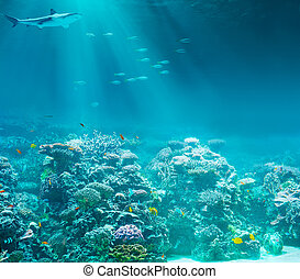 海, 或者, 海洋, 水下, 珊瑚礁, 由于, 鯊魚