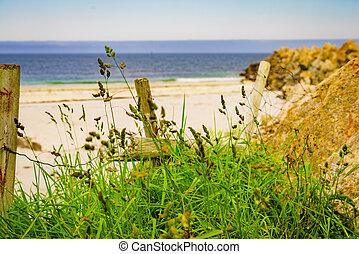 海, 求助, norway, andoya, bleik, 沙质的海滩, 海岸
