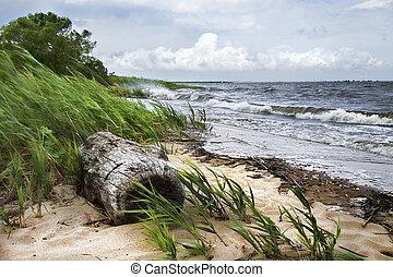 海, 流木
