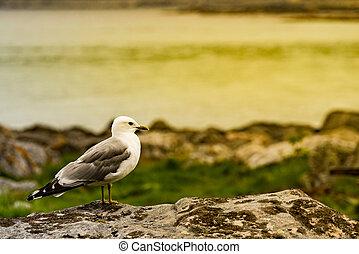 海, 海鸥, fjord, 岸