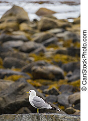 海, fjord, 海鸥, 岸
