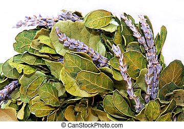 淡紫色, 花冠
