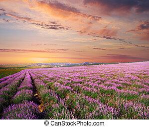 淡紫色, 草地