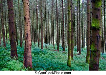 深, 森林, 在黑色中, 森林, 德國