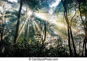 渡ること, sunrays, 木