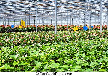 温室, 花, 植物