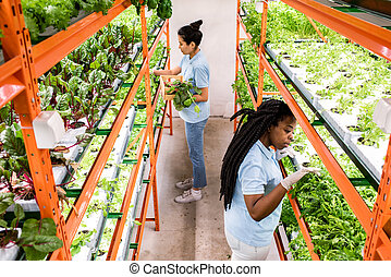 温室, 選択, 女性, 実生植物, 作成, 2, 労働者, intercultural