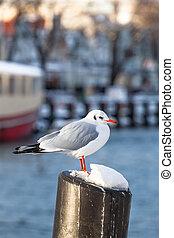 港, かもめ, 冬