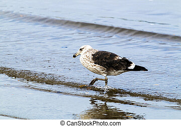 港, ウミツバメ, 鳥, 渡ること, shallows