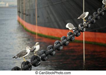 港, 鳥, 海, スペクタル