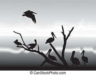 湖の海岸, pelikans
