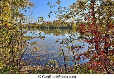 湖畔, 秋, 湖, 絵のよう, 風景, 秋, 金, -