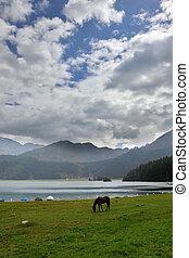 湖, サラブレッド, 馬, 海岸