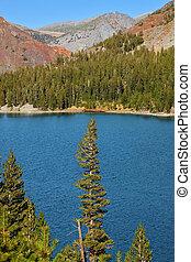 湖, 公園, yosemite, tioga