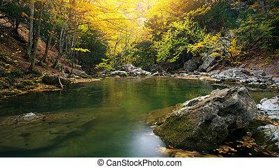 湖, 在中, 秋季, forest.