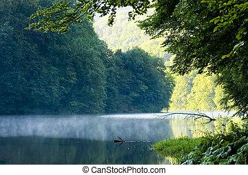 湖, 早晨, 在, 夏天