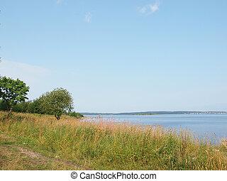 湖, 木, 海岸