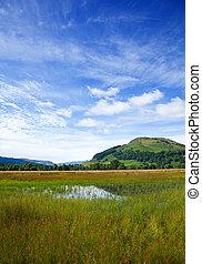 湖, 沼地, のまわり, tay