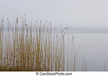 湖, 蘆葦, 有霧, 乾燥, 背景, 針對
