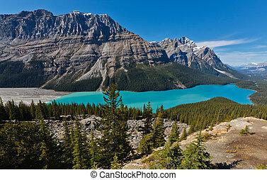 湖, peyto, カナダ, banff, 公園, 国民