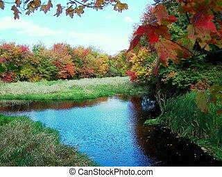 湿地, 中に, 秋