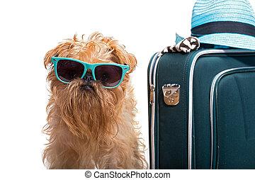 準備ができた, 犬, 休暇