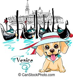 漂亮, 小狗, labrador, 威尼斯
