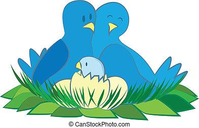 漂亮, 鳥, 家庭