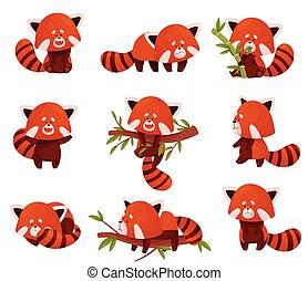 漫画, セット, 赤, 特徴, 別, 活動, パンダ, ベクトル