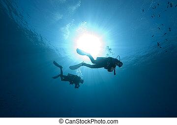 潛水者, fish, 海洋
