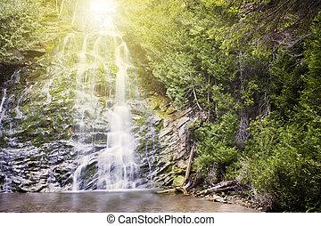 瀑布, 在, 森林