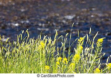 灌木, 海倫娜, montana, 河