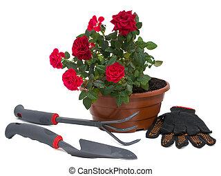 灌木, 玫瑰, 以及, 花園工具