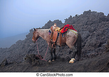 火山, 馬, guatemala, pacaya