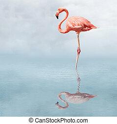 火烈鸟, 在中, 池塘