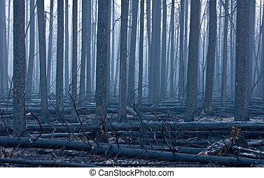 火, 余波, 森林