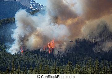 火, 山, 岩が多い, 森林