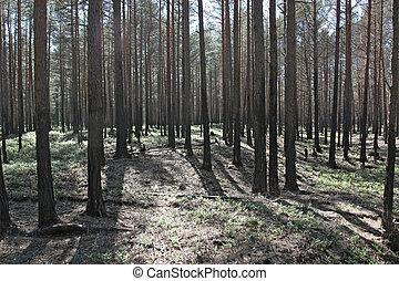 火, 後で, 森林